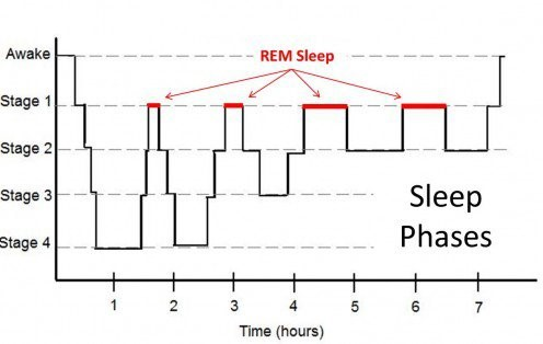 Chart illustrating the phases of sleep.